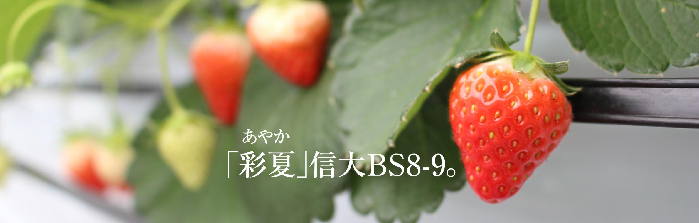 彩夏 信大BS8-9